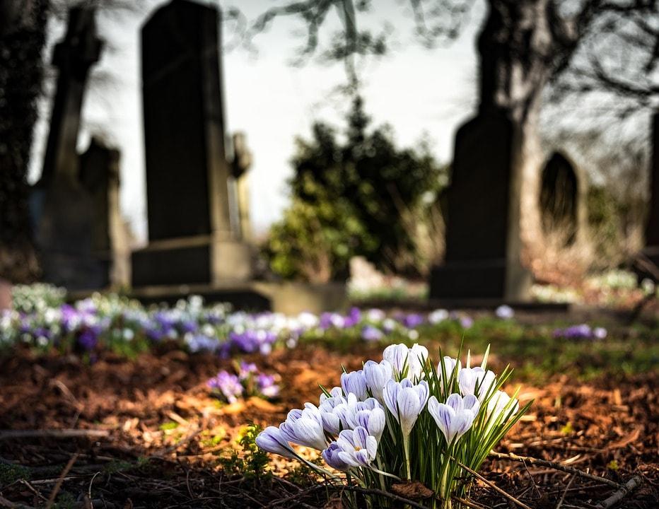 foto di fiori nel cimitero